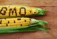 Россельхознадзор выявил факт выращивания ГМО-кукурузы в Рязанской области