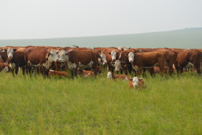 Фермеры Забайкалья не хотят заниматься молочным животноводством