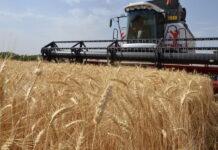 Урожайность зерна и объемы сбора зерновых в Татарстане снизились в два раза