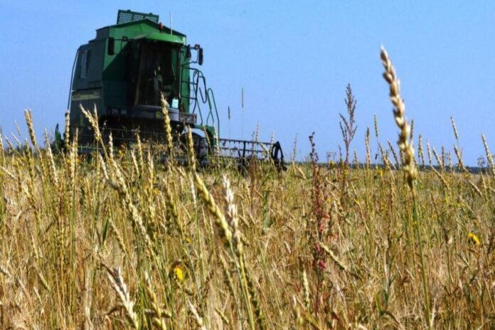 Засуха нанесла костромским аграриям многомиллионный ущерб