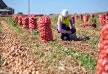 Правительство требует роста урожая