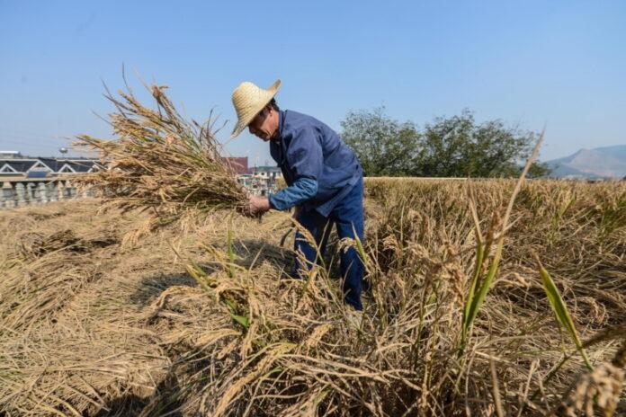 За основу развития села Китай взял поддержку мелких фермеров