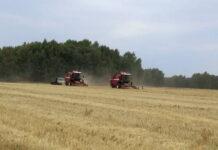 В Омской области из-за засухи пропали 40 тысяч гектаров