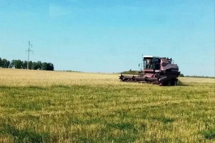 Засуха лишила курганских аграриев свыше 5 миллиардов рублей