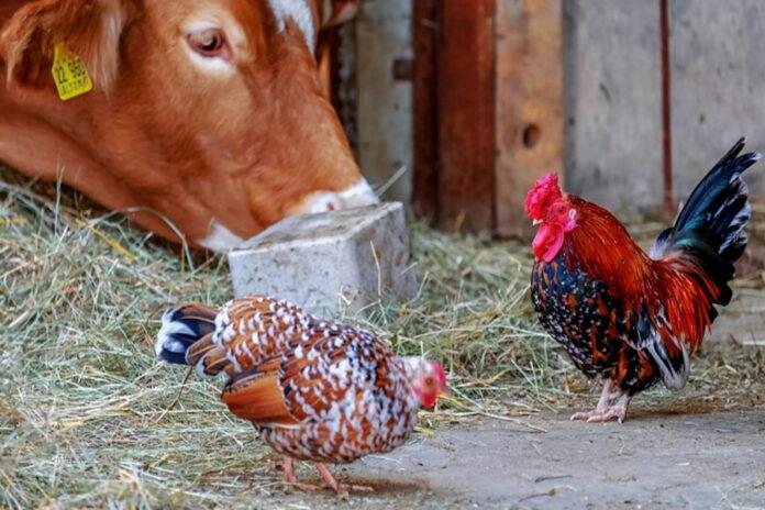 Россиянам запретили держать скот и птицу на садовых участках