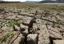 Из-за гибели урожая от засухи в Чувашии ввели режим ЧС