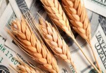 Экспортные пошлины на российскую пшеницу продолжают расти