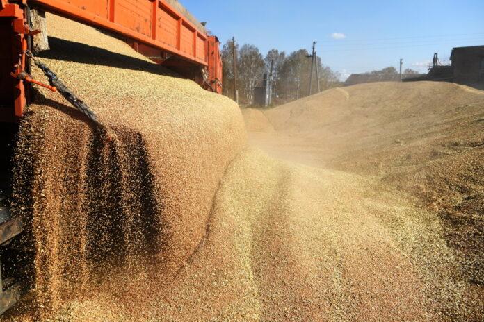 Внешэкономбанк оценил потери аграриев от экспортных пошлин