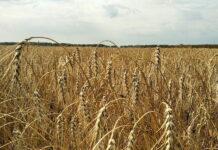 В Татарстане посчитали сумму ущерба от засухи — цифры впечатляют