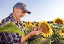 Рестарт новая вершина гербицидных технологий подсолнечника-min