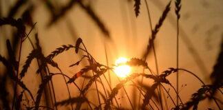 Гидрометцентр предупредил о сложных погодных условиях для посева озимых