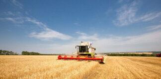 Российский зерновой союз снизил прогноз по валовому сбору зерна