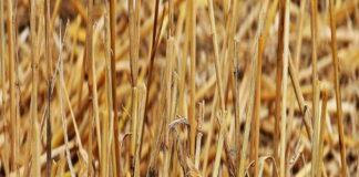 В Нижегородской области в связи с гибелью урожая введен режим ЧС