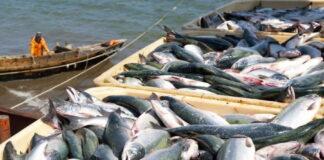 Золотая рыбка: Минсельхоз планирует увеличить налоги для рыбопромышленников