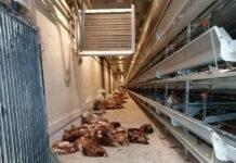 Заложники ситуации: сотрудники птицефабрики не могут покинуть рабочие места