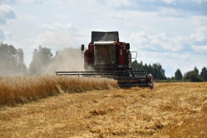 В Ярославской области прогнозируется снижение урожайности сельскохозяйственных культур