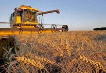 Росстат: в РФ рухнул объем производства продукции сельского хозяйства