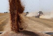 Сельхозпроизводители Кировской области потеряли из-за засухи 23% урожая