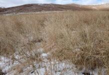 Забайкалье вводит режим ЧС из-за сильного снегопада