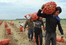 Минсельхоз нашел решение проблемы дефицита персонала в сельском хозяйстве