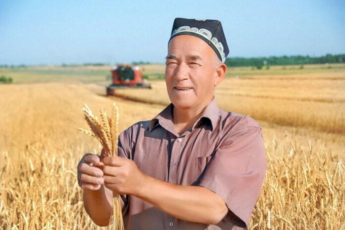 Минсельхоз объяснил предложение об аренде российских земель узбекскими аграриями
