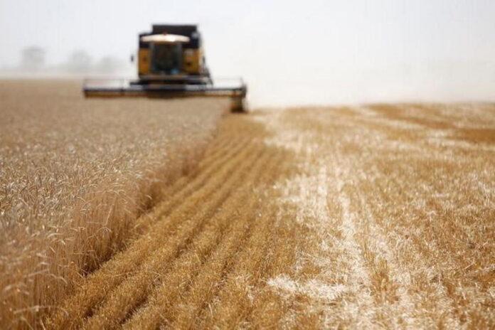 В российской экономике сельское хозяйство оказалось единственным падающим сектором