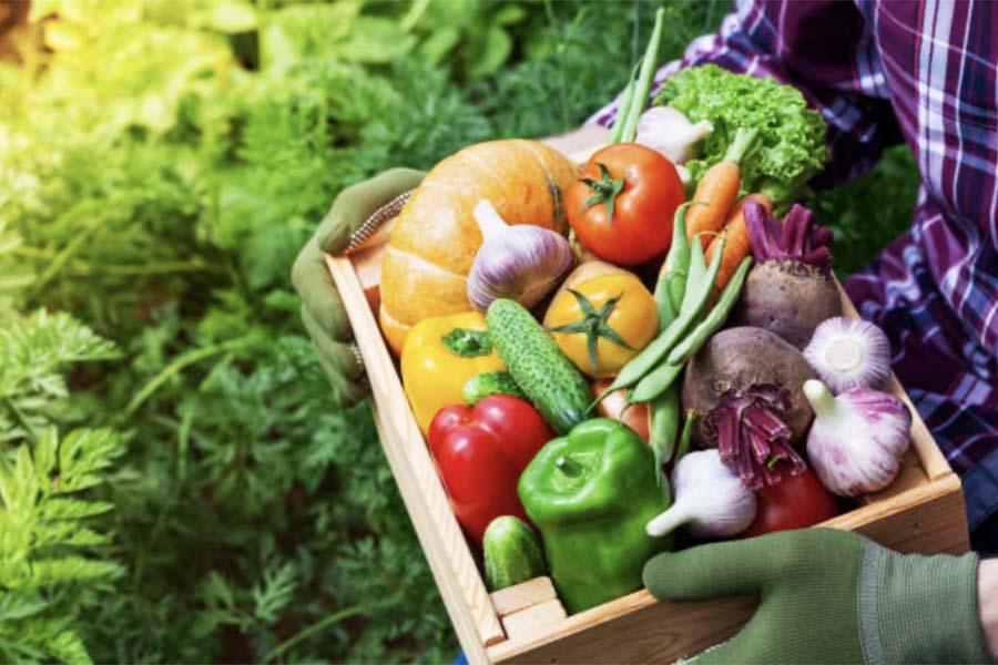 Гнили плодов при хранении овощей фруктов