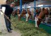 """В России начались торги животными через электронный сервис """"Скотный Двор"""""""