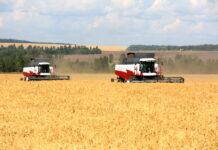 В Белгородской области снизилось производство зерновых и зернобобовых