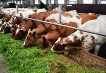 В Омской области уменьшается поголовье скота и дорожает мясо