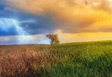 Россия приспособится к ведению сельского хозяйства в условиях изменения климата — Владимир Путин