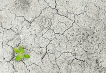 Убытки от гибели сельхозкультур в Нижегородской области составили 151 млн рублей
