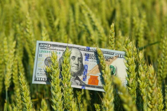 На фоне дорогого российского зерна вырос интерес к украинской пшенице