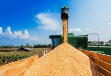 В России вырастет экспортная пошлина на пшеницу