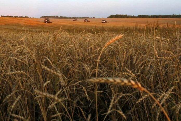Экспортные цены на российскую пшеницу продолжают расти вслед за мировыми