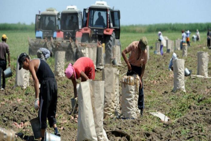 В Астраханской области вдвое сократился сбор овощей из-за нехватки трудовых мигрантов