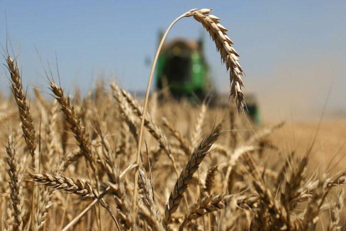 За счет недобора урожая хозяйства Татарстана недополучили в 2021 году свыше 28 млрд рублей
