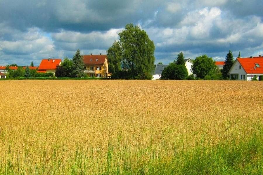 Доходы от экспортных пошлин на зерно направят на развитие села
