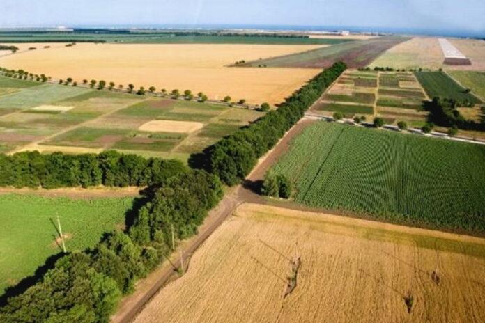 Российский рынок сельхозземель: спрос превышает предложение